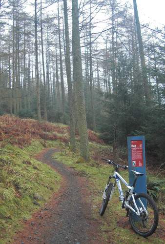 <strong>The faithful steed at Kirroughtree.</strong><br />Copyright Haydn Williams 2009