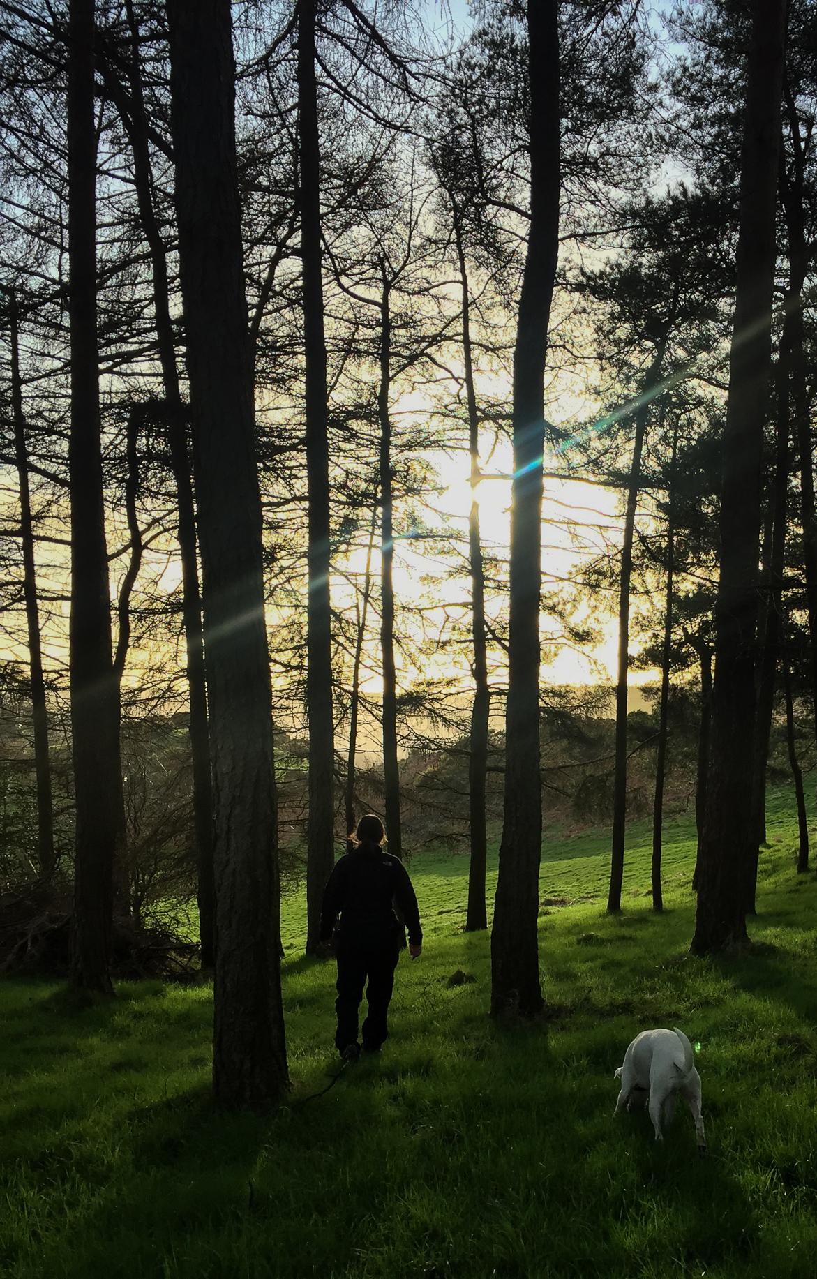 "Wandering in the ""garden"". ©Haydn Williams 2017"