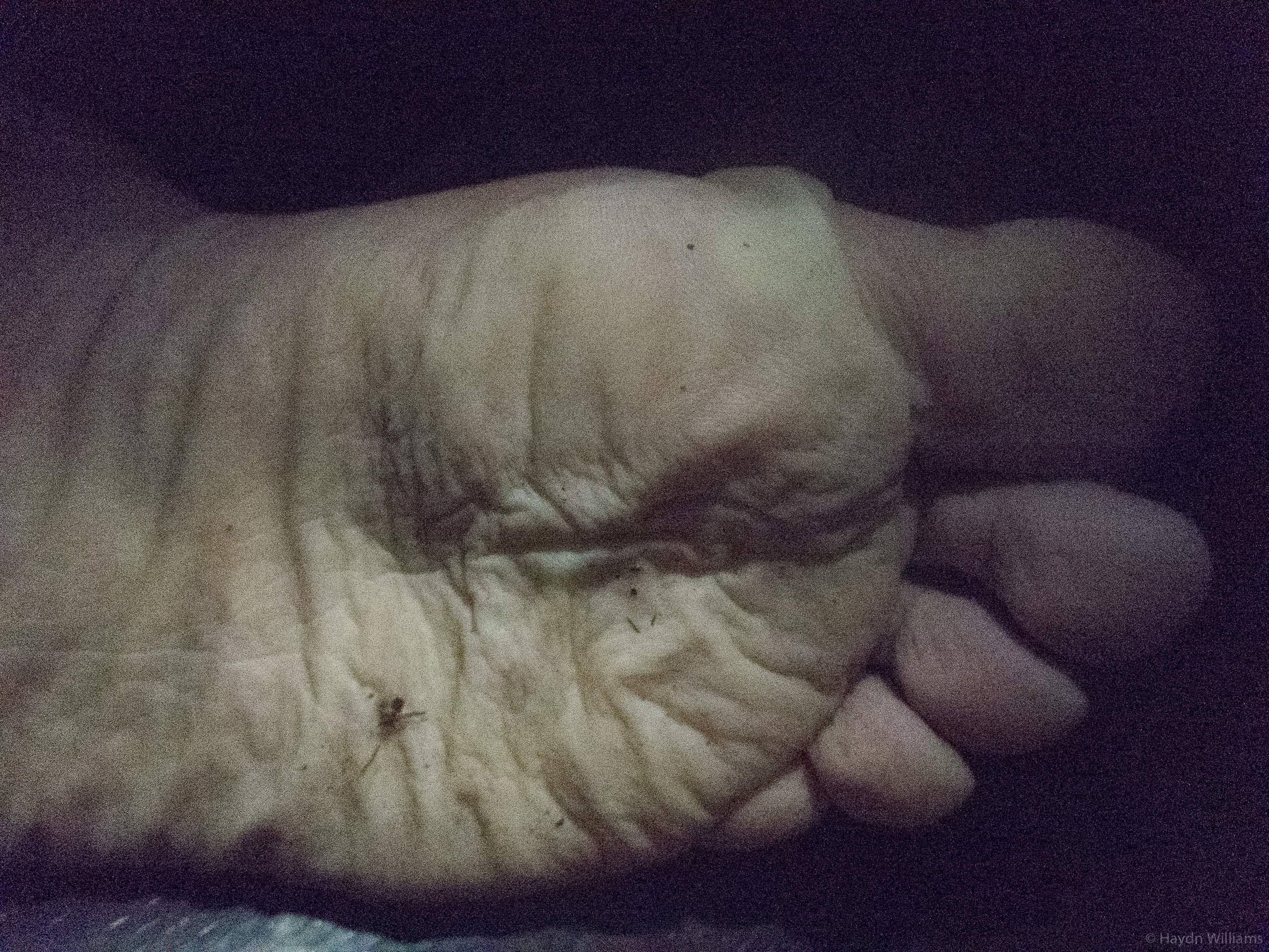 Day 4 - Nasty end-of-the-day feet. © Haydn Williams 2017