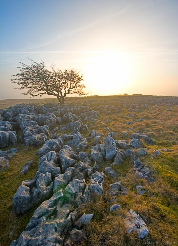 Limestone pavement, Yorkshire Dales. © Haydn Williams 2006