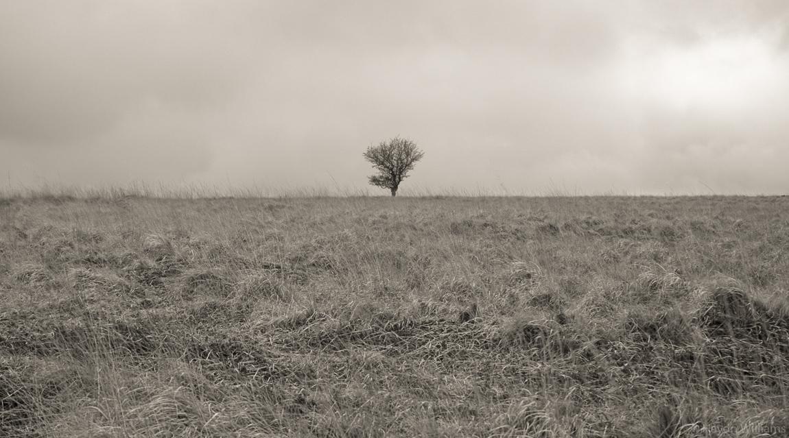A lone tree above Curbar Gap. © Haydn Williams 2004